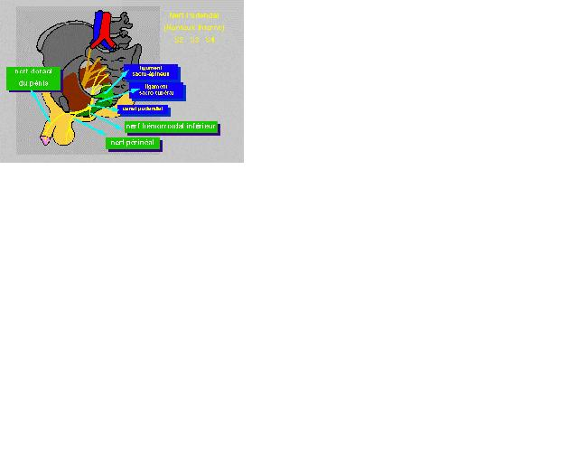 prostatite chronique traitement